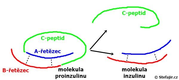 C-peptid