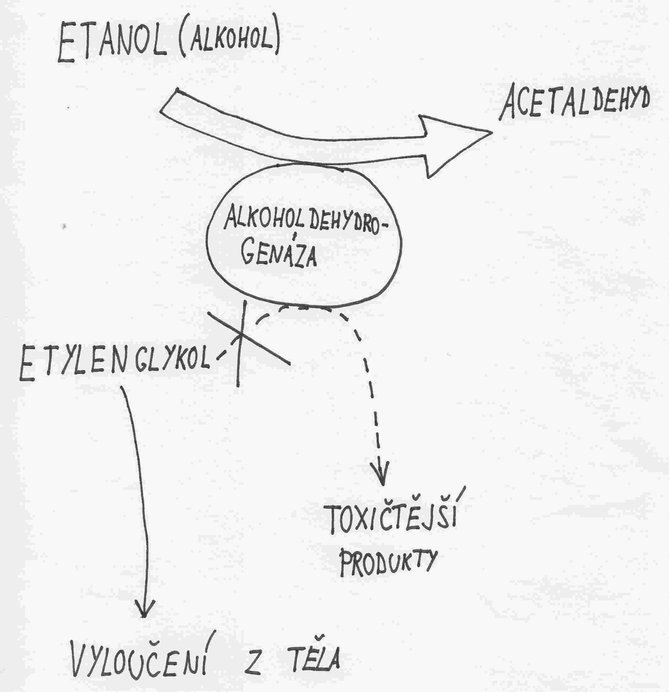 Otrava etylenglykolem - schema