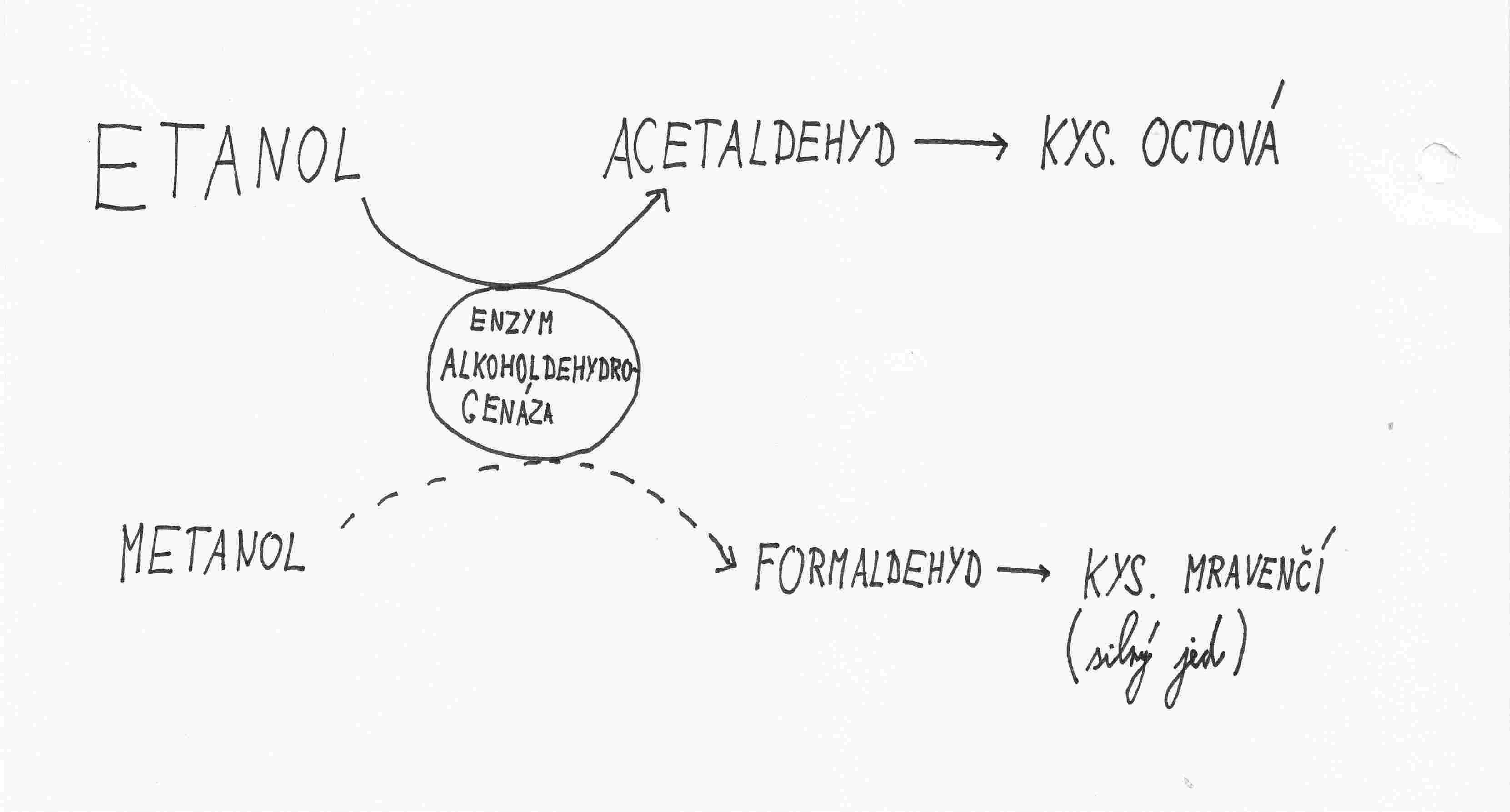 Otrava metanolem - schema