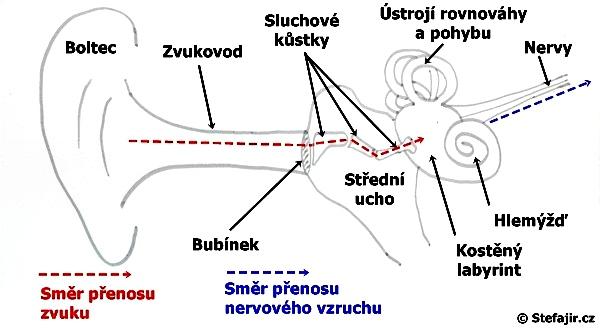 Anatomie ucha